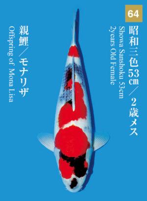 dainichikai2017_64