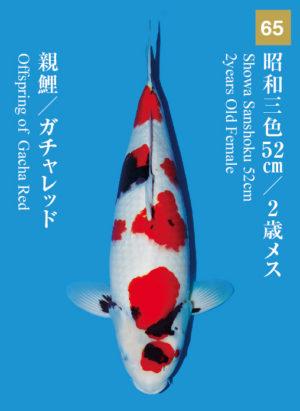 dainichikai2017_65