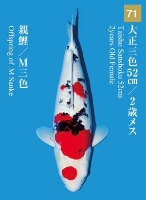 dainichikai2017_71